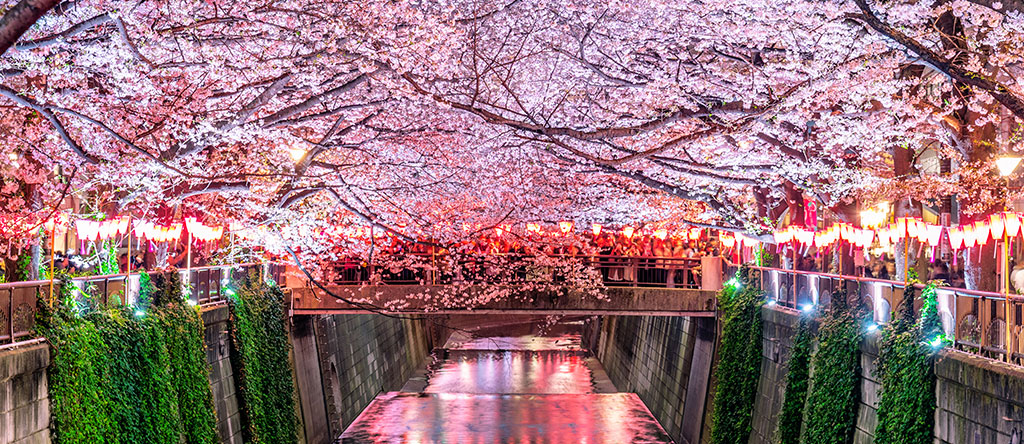The Ultimate Hanami & Picnic Guide – Enjoy Sakura Season in Singapore