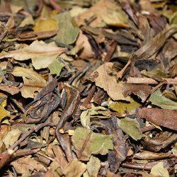 White Peony Tea (Bai Mu Dan Tea) 50g / 白牡丹茶