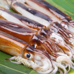 【Fresh!】Japanese Sashimi Squid (Surume Ika) 1pc / 石川県小木産スルメイカ 船上凍結品!鮮度抜群のするめ烏賊♪