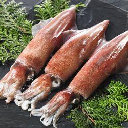 【 Recommended! お薦め!】Frozen Sashimi Squid (Shiro Ika) 1pc / 高級イカ刺し用 隠岐産 冷凍白いか・剣先イカ CAS凍結品 刺身用