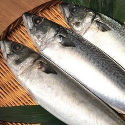 【Araya/あらや 】Hachinohe Saba Maru (Chub Mackerel) / 八戸産冷凍真さば丸