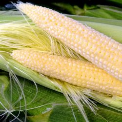 Kawatsuki Young Corn (Young Corn with Husk) from Japan ~50g /  皮付きヤングコーン【Delivers on Fri & Sat | 金曜日&土曜日配達分受付中】